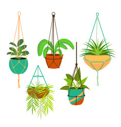 Cartoon color macrame hangers for home plants set vector