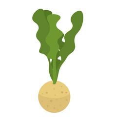celery plant icon isometric style vector image