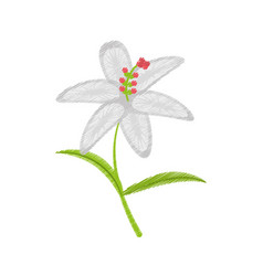 drawing crocus flower petal leaf vector image