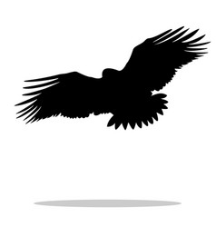 eagle hawk golden eagle bird black silhouette vector image