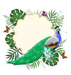 Frame with peacock tropical plants vector