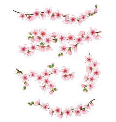 japanese cherry branches set vector image