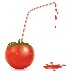 wet tomato and straw vector image