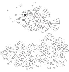 Boxfish vector image vector image
