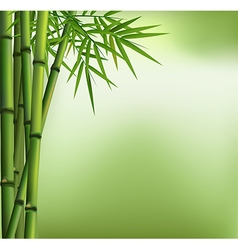 Green bamboo grove isolated on background vector