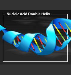 Nucleic acid double helix vector