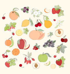 Set of of fruits and berries vector