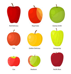 Apples different varieties with a description set vector