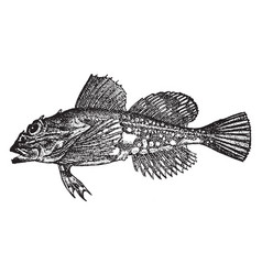Daddy sculpin vintage vector