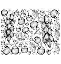 Hand drawn of ebony and barringtonia edulis fruits vector