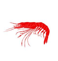 red shrimp logo isolated on white background vector image