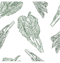 chenese kale or chinese broccoli seamless pattern vector image