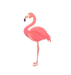 flamingo bird design on background vector image