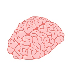 pink brain vertical view vector image