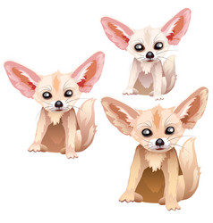sandy foxes of different ages stages of growth vector image