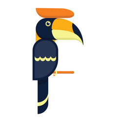 toucan hornbill bird flat design vector image