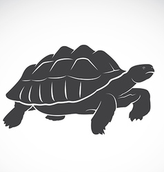 Turtle on white background vector