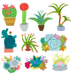 Cactus botanical cacti potted cute vector