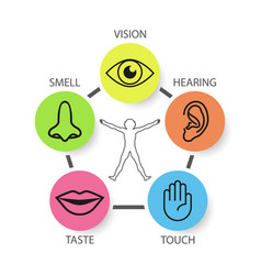 Icon set of five human senses vision smell vector