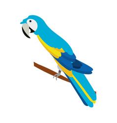 isolated cute blue guacamaya vector image