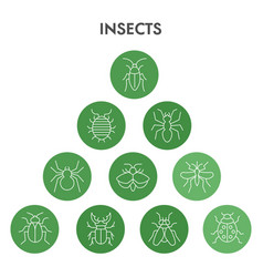 Modern insects infographic design template pest vector