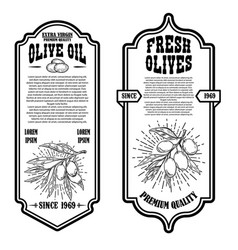 set vintage olive oil flyer templates design vector image