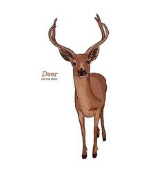 deer animal hand draw sketch vector image