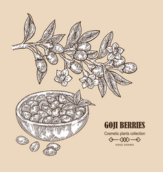 hand drawn goji berries on a branch vector image