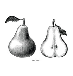 pear fruit hand draw vintage clip art isolated on vector image