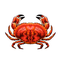 Red crab from a splash watercolor colored vector