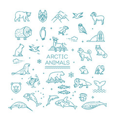 set linear arctic animals vector image
