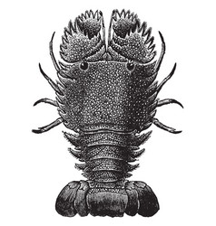 Slipper lobster vintage vector