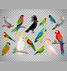 tropical parrot set on transparent background vector image