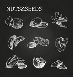 nuts and seeds sketch on chalkboard vector image