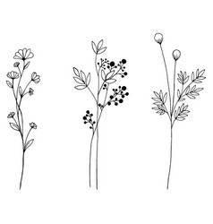 hand drawn of vintage flowers elements isolated vector image vector image