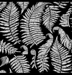 graphic fern leaves vector image