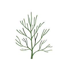 Green fresh dill leaf vegetarian healthy food vector