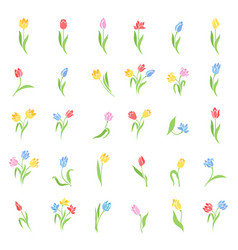 Set of colored tulips vector