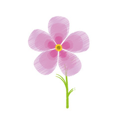 Drawing magnolia flower flora ornament vector