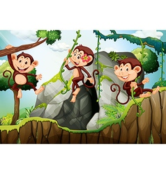 Three monkeys hanging on the branch vector image