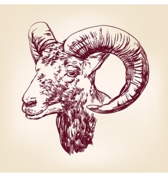 Goat hand drawn llustration realistic sketch vector