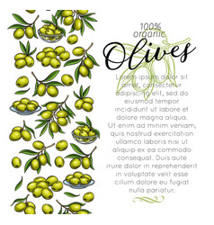 Page template with sketch olives vector