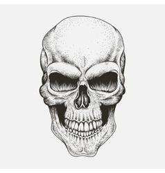 Scary skull human vector