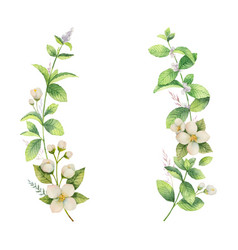 watercolor frame of jasmine and mint vector image vector image