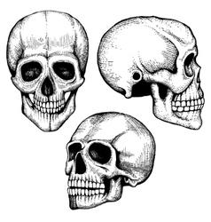 Hand drawn death scary human skulls vector image