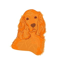English cocker spaniel isolated on white vector