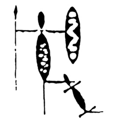 tribesman attacked vector image