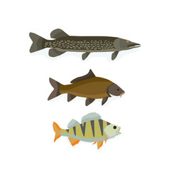 set of freshwater fish perch carp pike vector image