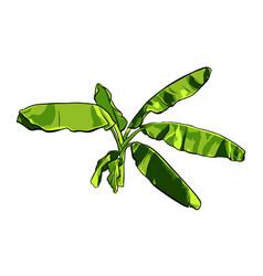 banana palm tree design vector image
