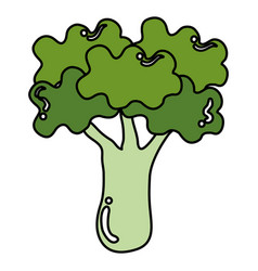 broccoli fresh isolated icon vector image